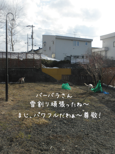 babara_20130420214458.jpg
