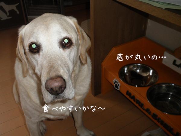 ball_20130331213749.jpg