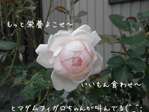 bara1_20130707214616.jpg