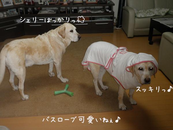 basurobu.jpg