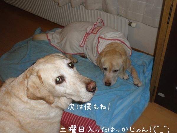 basurobu2.jpg