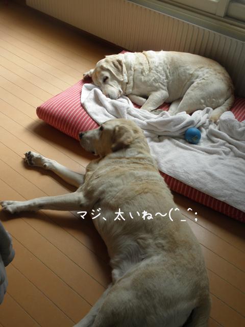 bed1_20130413213420.jpg