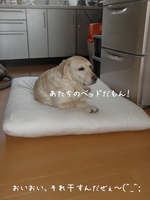 bed1_20130423220212.jpg