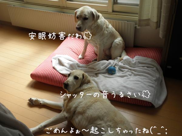 bed2_20130413213845.jpg