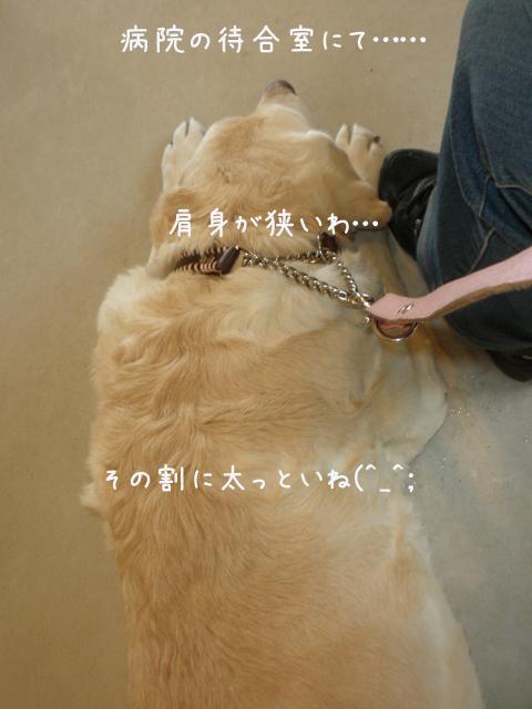 byouin_20130503232143.jpg