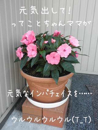 hana_20130628215201.jpg
