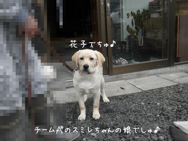 hanako1.jpg