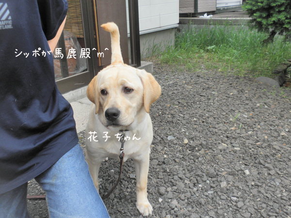 hanako1_20130618213014.jpg