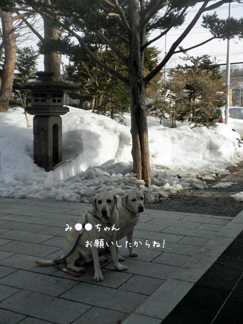 jin2_20130331213815.jpg