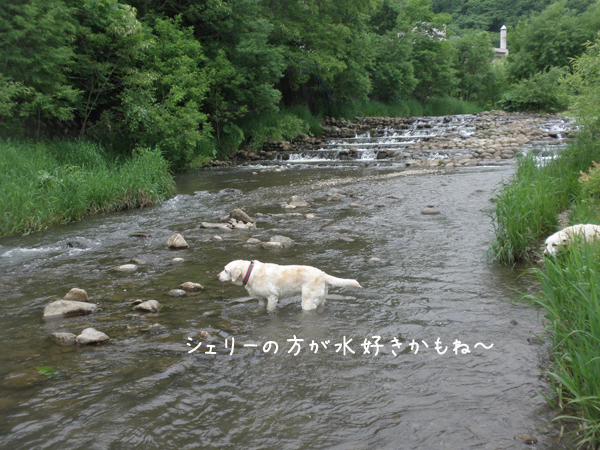kawa1_20130618213044.jpg