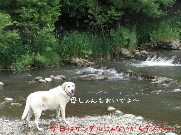 kawa1_20130706210648.jpg