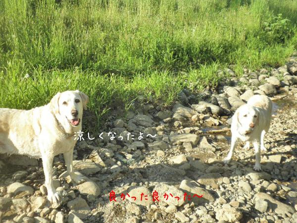 kawa3_20130612212604.jpg