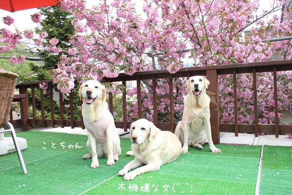 kotobaru_20130528182657.jpg