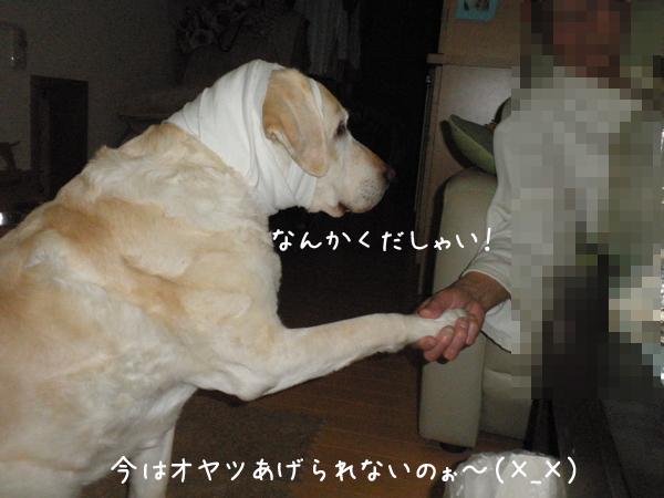 kudasai_20130506213141.jpg