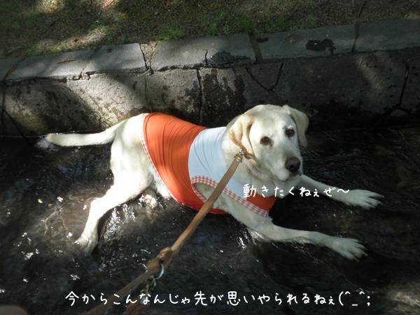 maru_20130602004437.jpg