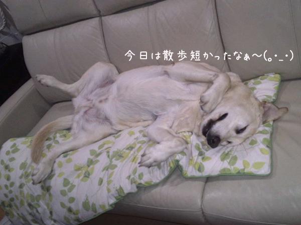 maru_20130625213622.jpg