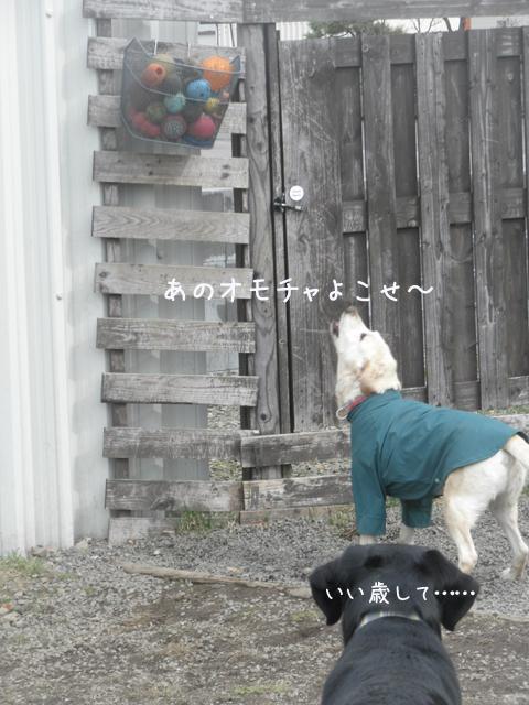 maruomotya11.jpg