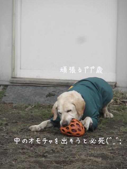 maruomotya_20130427221154.jpg