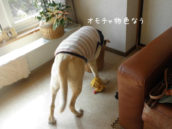 maruomotya_20130508191738.jpg