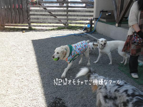 maruomotya_20130630204730.jpg
