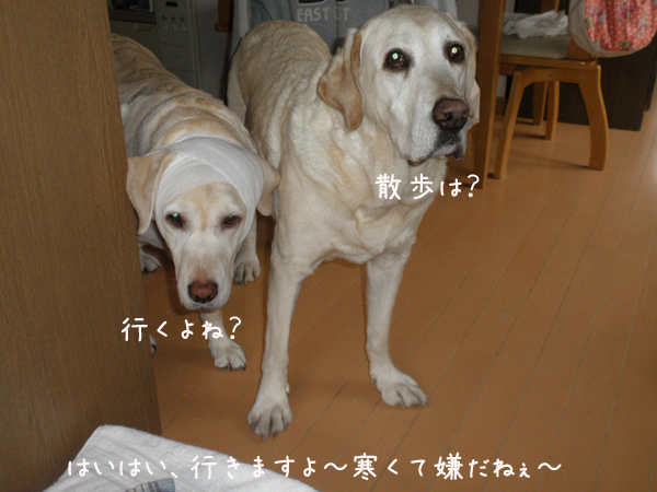 marusyeri1_20130513200634.jpg