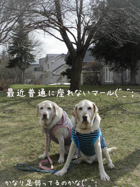 marusyeri_20130429214946.jpg