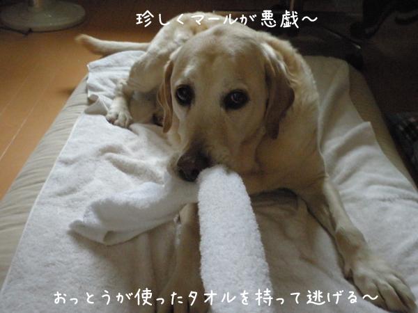 marutaoru_20130505220413.jpg