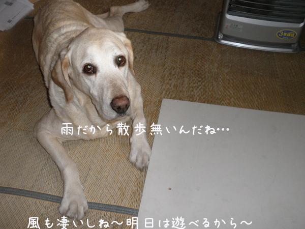 maruwasitu_20130414212441.jpg