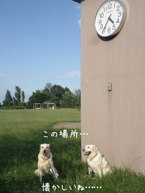 miya1_20130704204000.jpg