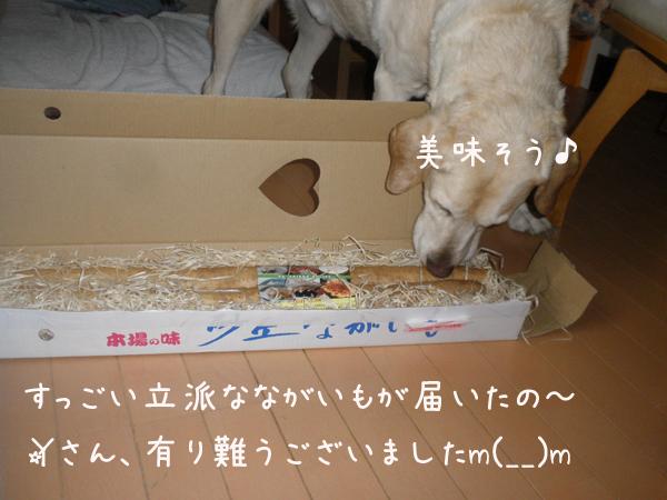 nagaimo_20130430184611.jpg