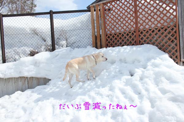 niwa1_20130401204155.jpg