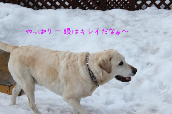 niwa3_20130401204207.jpg