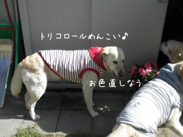 niwa3_20130628214735.jpg