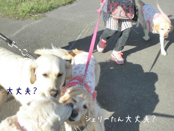 notei_20130507212730.jpg