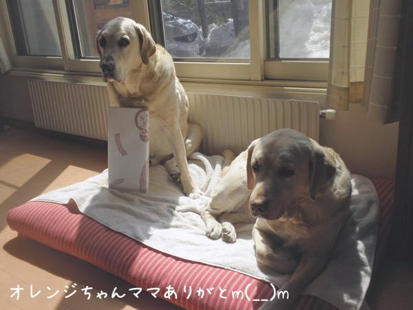 orenji_20130405214217.jpg