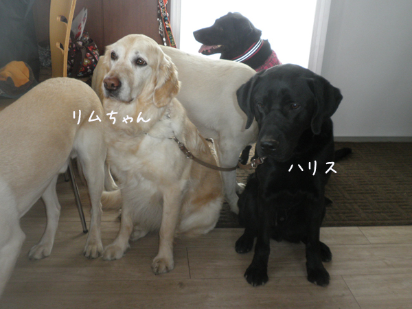 rimuharisu_20130427222722.jpg
