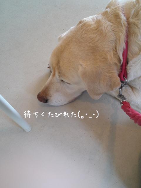 s1_20130409205107.jpg