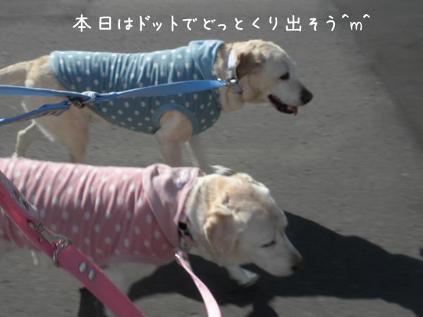sanpo1_20130422190719.jpg