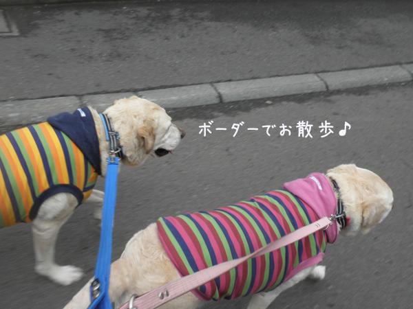 sanpo1_20130505213133.jpg