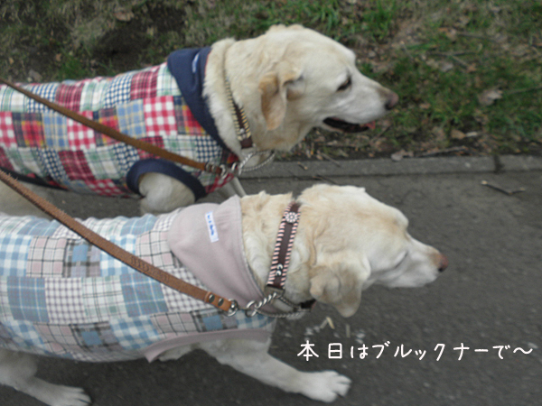 sanpo1_20130512222451.jpg