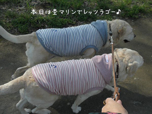 sanpo1_20130516195604.jpg