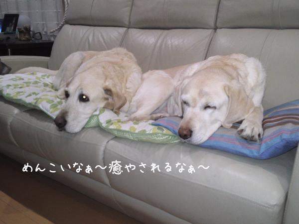 sofa1_20130409211308.jpg