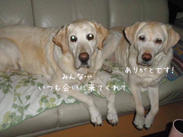 sofa_20130414212450.jpg