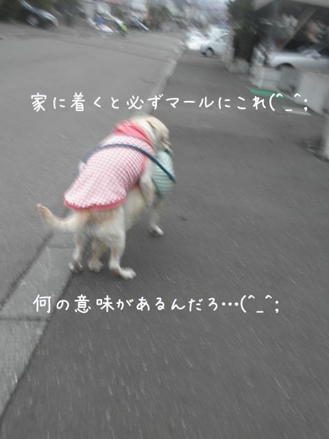 syerimaru_20130418212504.jpg