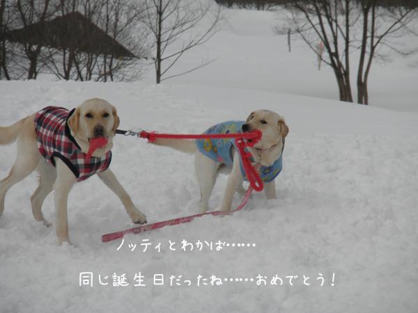 wakabanotei_20130623203028.jpg