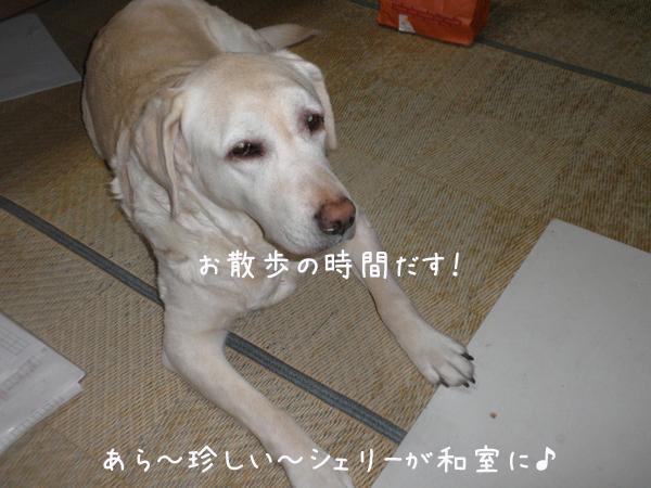 wasitu_20130426204050.jpg