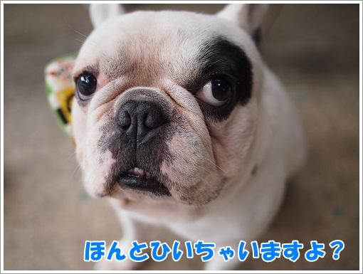 20141101_6.jpg