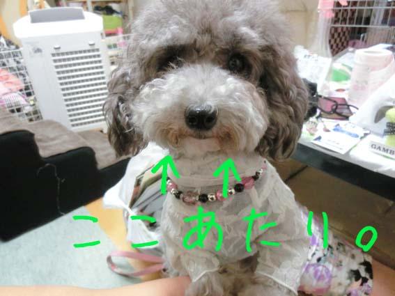 じる日記用9月5日-2