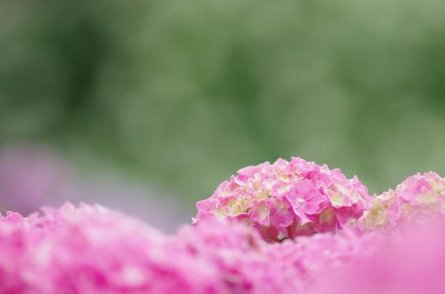 9 淡~ピンクの海から~