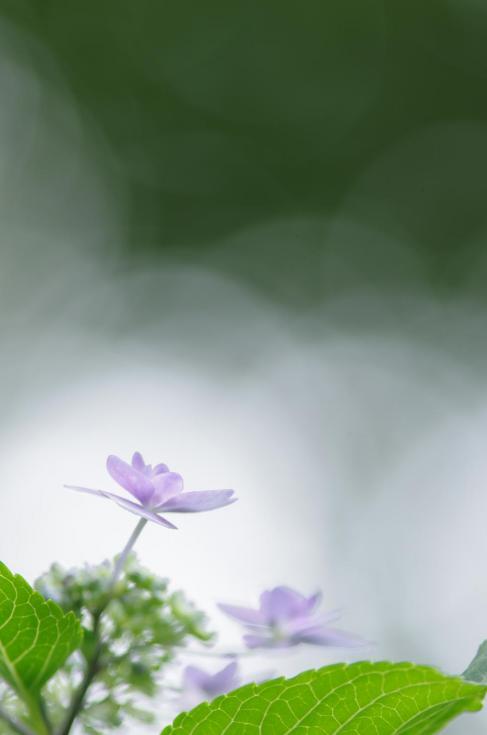 10 曇~梅雨の煌き~